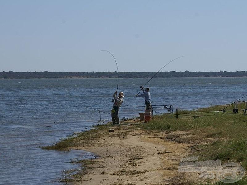 A halak nagyon gyorsan reagáltak az etetésre, a halfogás szinte azonnal megindult!