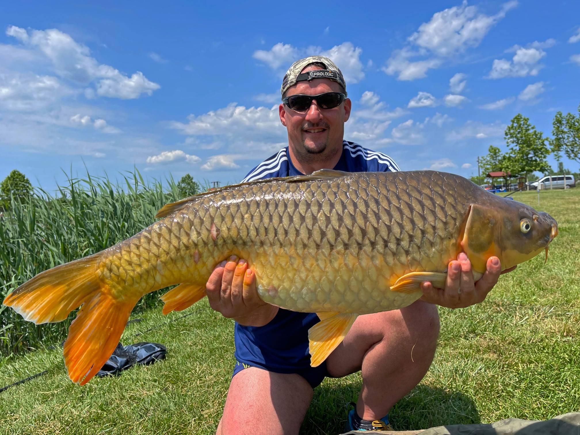 Íme, az Ezüst-tó kincse! Ezt a gyönyörű halat legutóbb 2021. áprilisában, épp a4 évszak Haldorádó Method Feeder Kupa tavaszi fordulójában fogta meg Varga Mónika horgásztársunk, méghozzá 13,44 kg-mal. A ritka szép koi ponty mostanra már gyarapodva aranyozhatja be valaki napját!