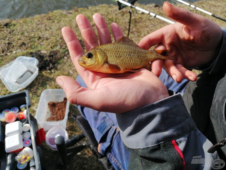 Csodaszép hal, kár, hogy csak ritkán találkozunk vele