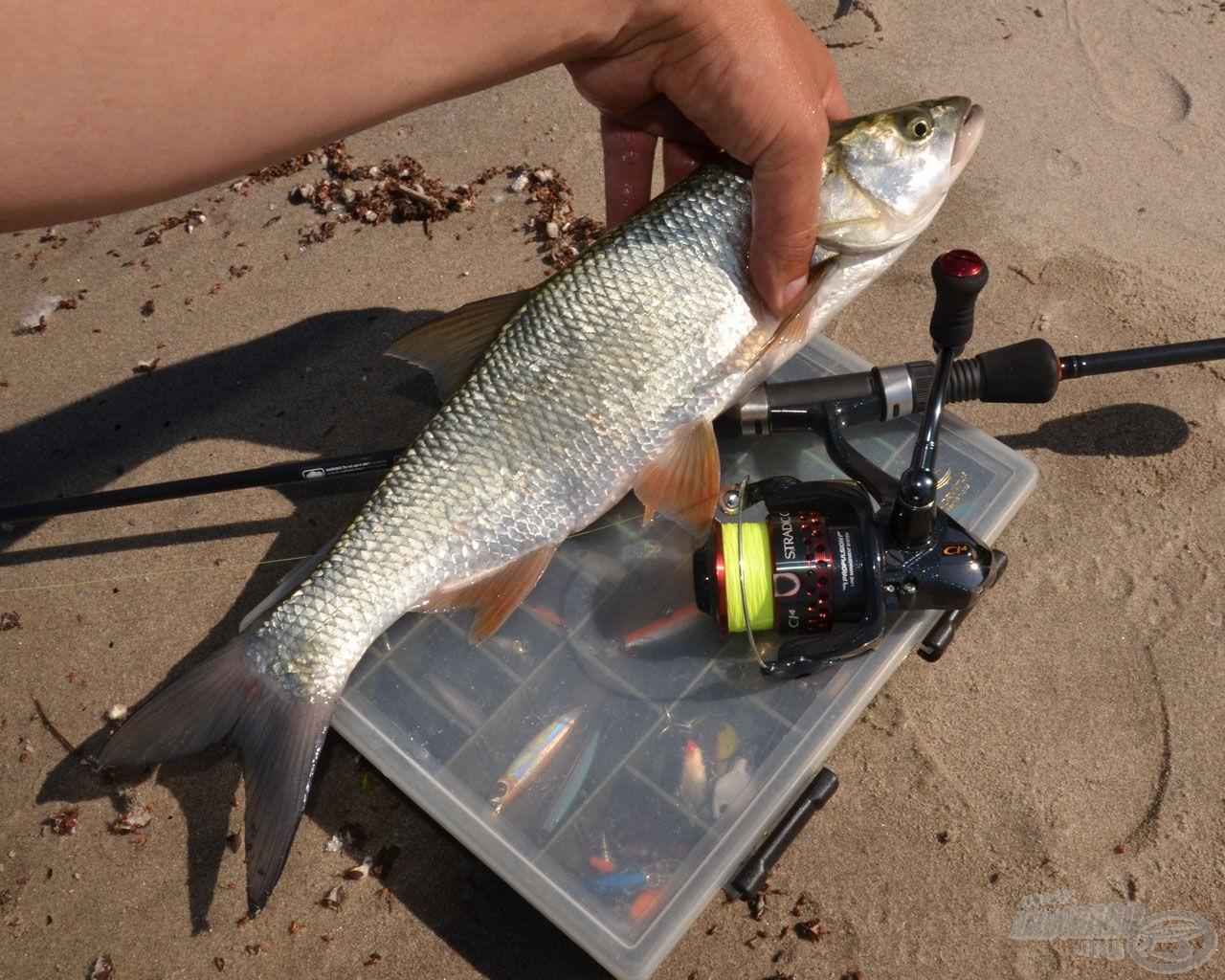 Ameddig Zoli telefonált, én fotóztam a halat