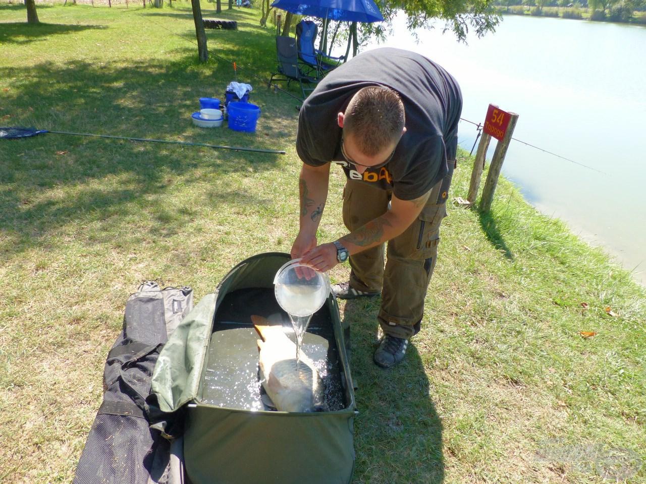 Mindig ügyeljünk rá, főleg, ha nagyon meleg van, hogy a halat folyamatosan locsoljuk, és a matrac is vizes legyen!