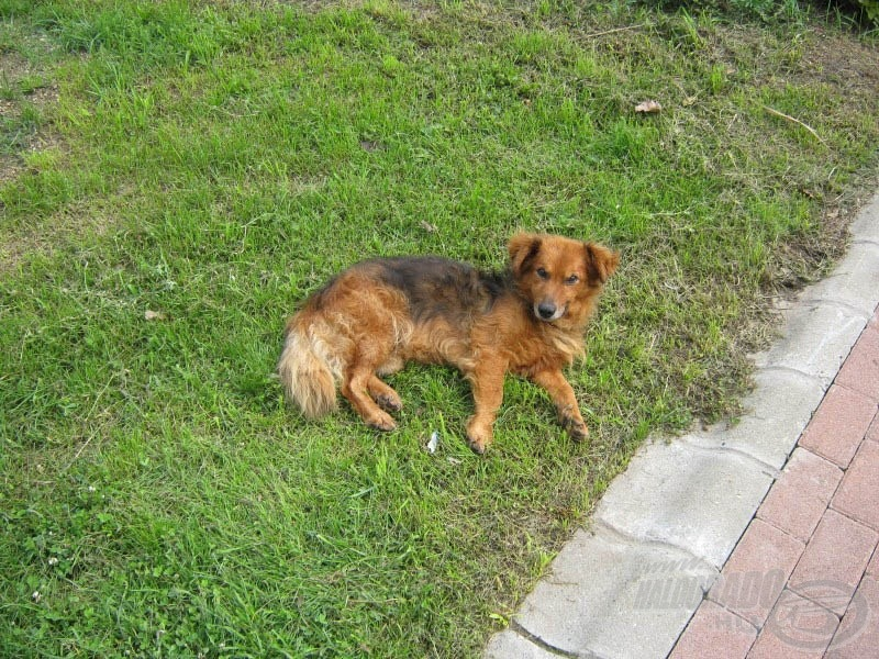 … és végül, de nem utolsósorban Security (ejtsd: security) kutyának, aki éberen őrködött felettem