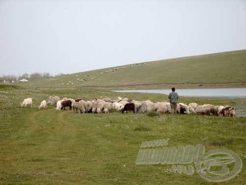 A nomád állattartás felettébb jellemző a Raduta tározóra, de már kellően hozzászoktunk, szinte hozzátartozik a 'programhoz'