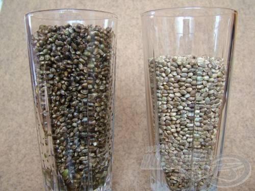 Az áztatás után a kender ennyit dagad. Jobb oldalon a száraz és baloldalon az ugyanolyan mennyiségű, de már előáztatott kendermagvak