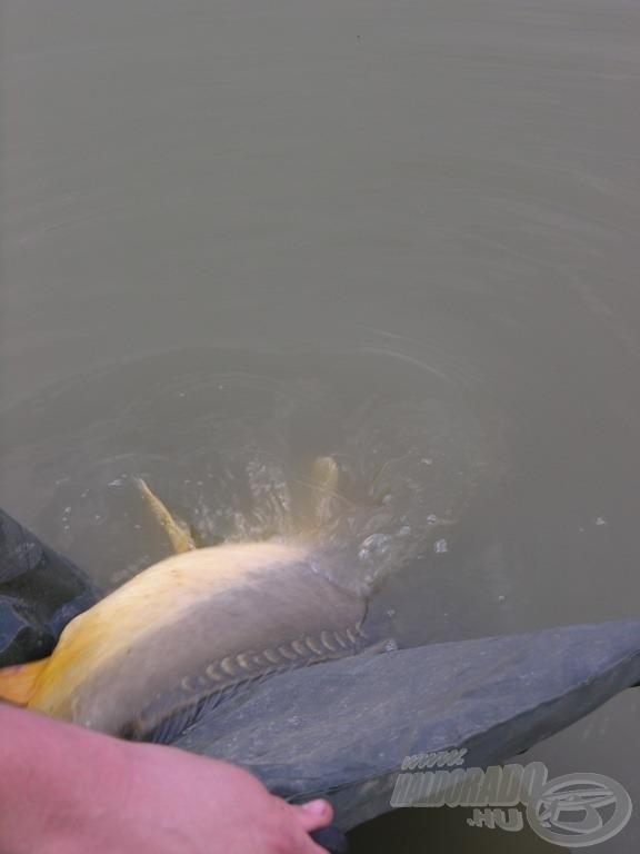 Egyszerű odafigyeléssel sokat javíthatnak a halak egészségén a horgászok