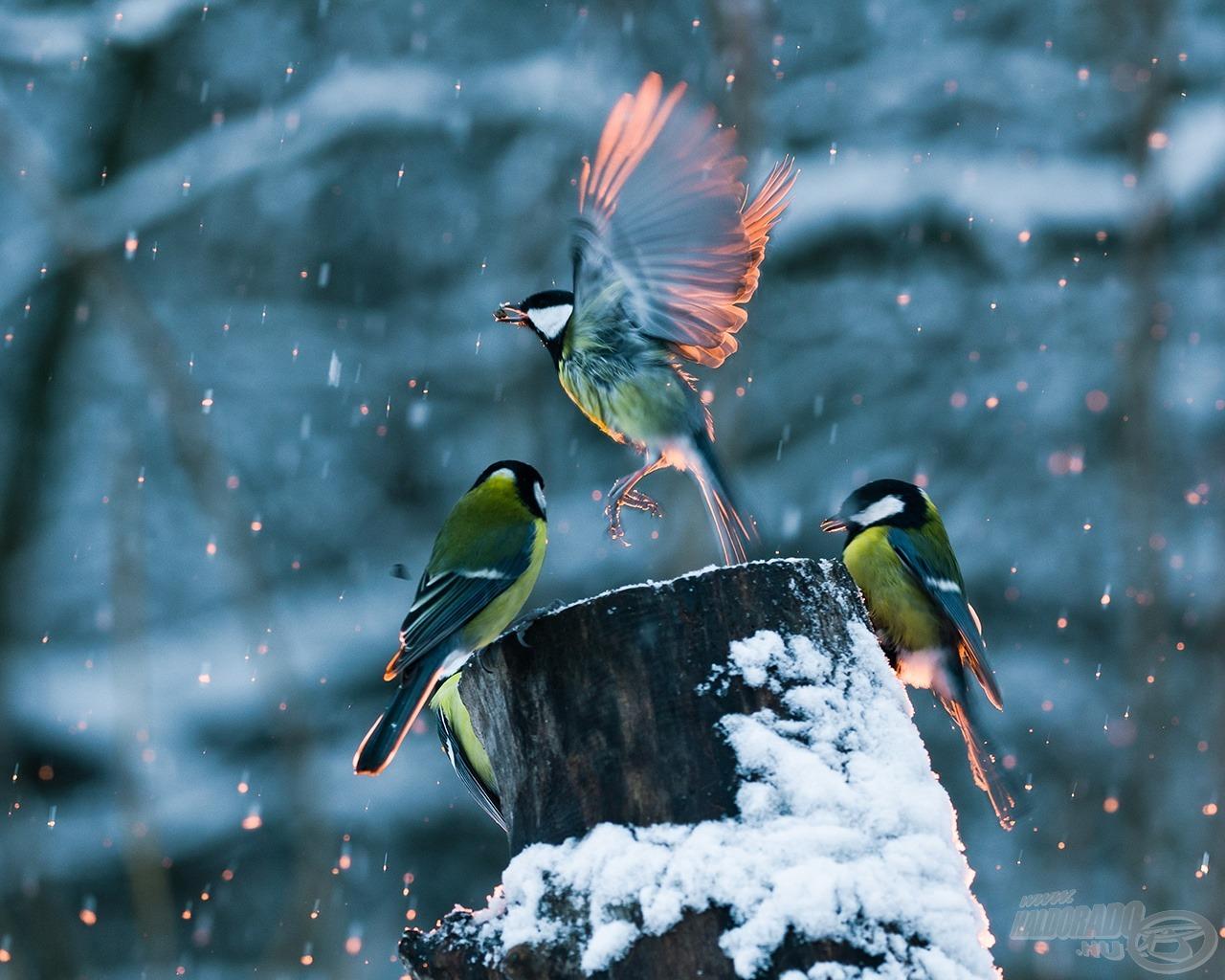 Cinegék a hóesésben