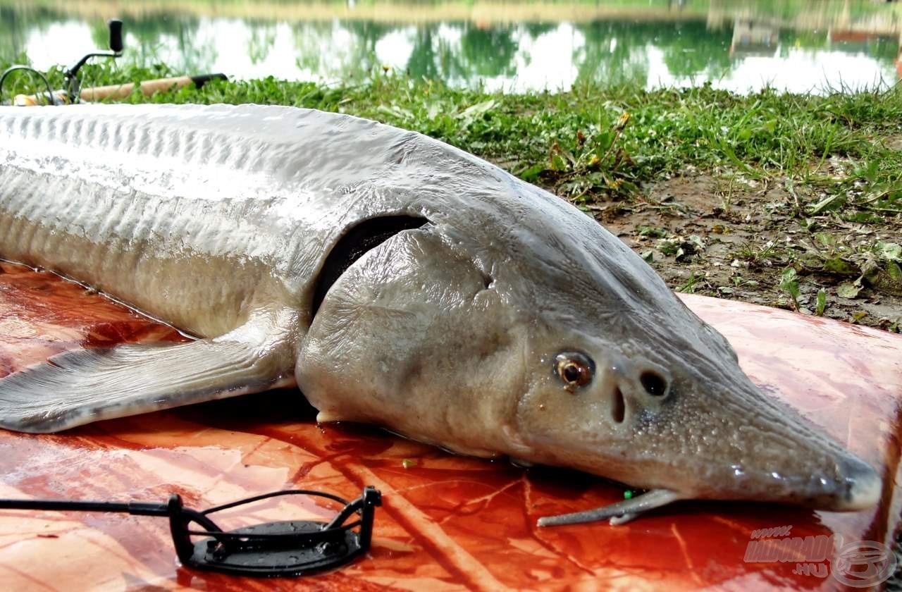 Kicsi kosár, nagy hal!