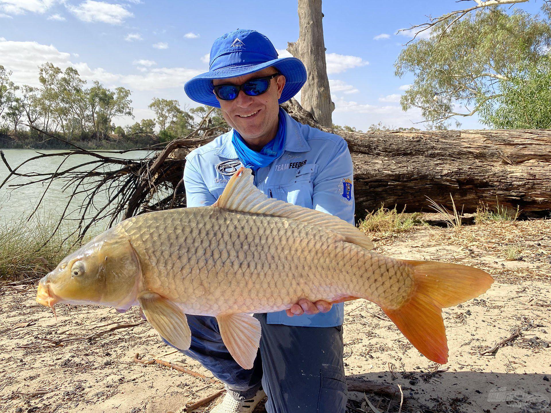 Ahogy az aprónép jóllakott, a nagyobb, termetesebb halak is újfent megjelentek előttünk