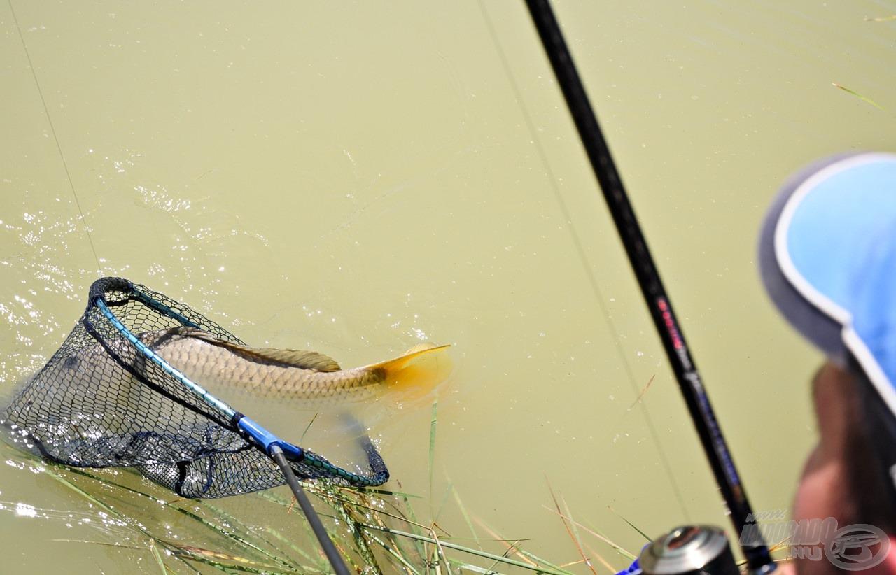 E csípős, erős csalinak köszönhetően aznap csak nagytestű halakat tereltem szákba