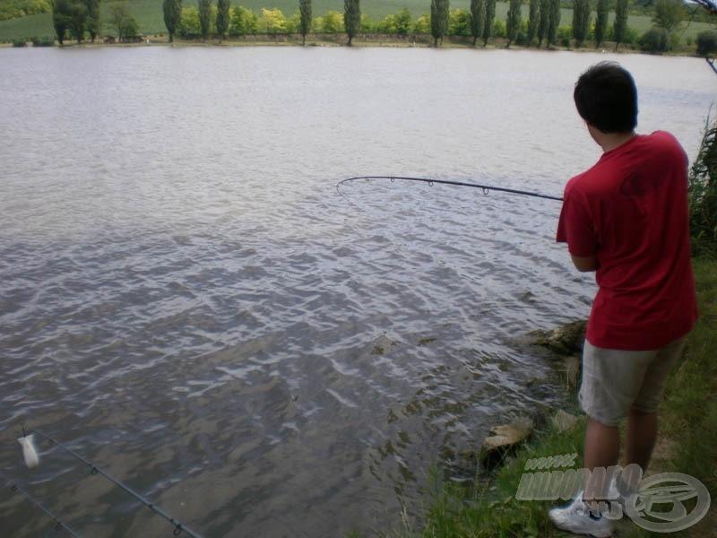 A hal a parti kövek közé próbálta meg bevenni magát