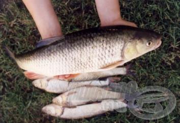 A 24 órás horgászat legszebb hala.