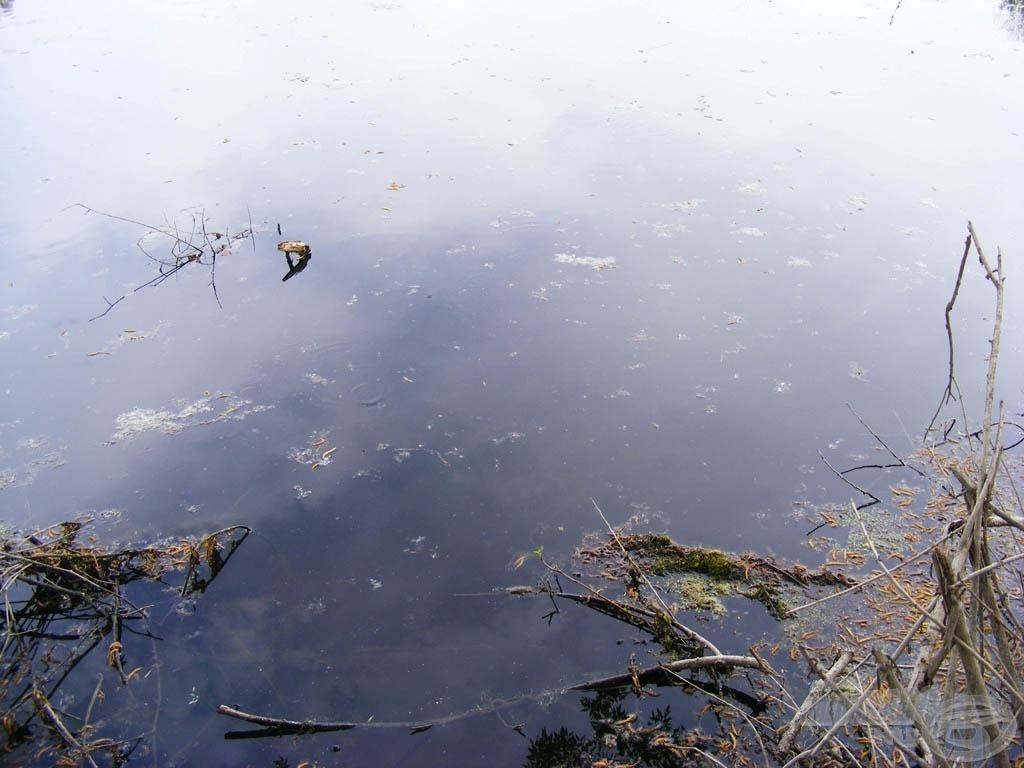 Ágak a vízben és fölötte, ez volt a tisztább szakasz