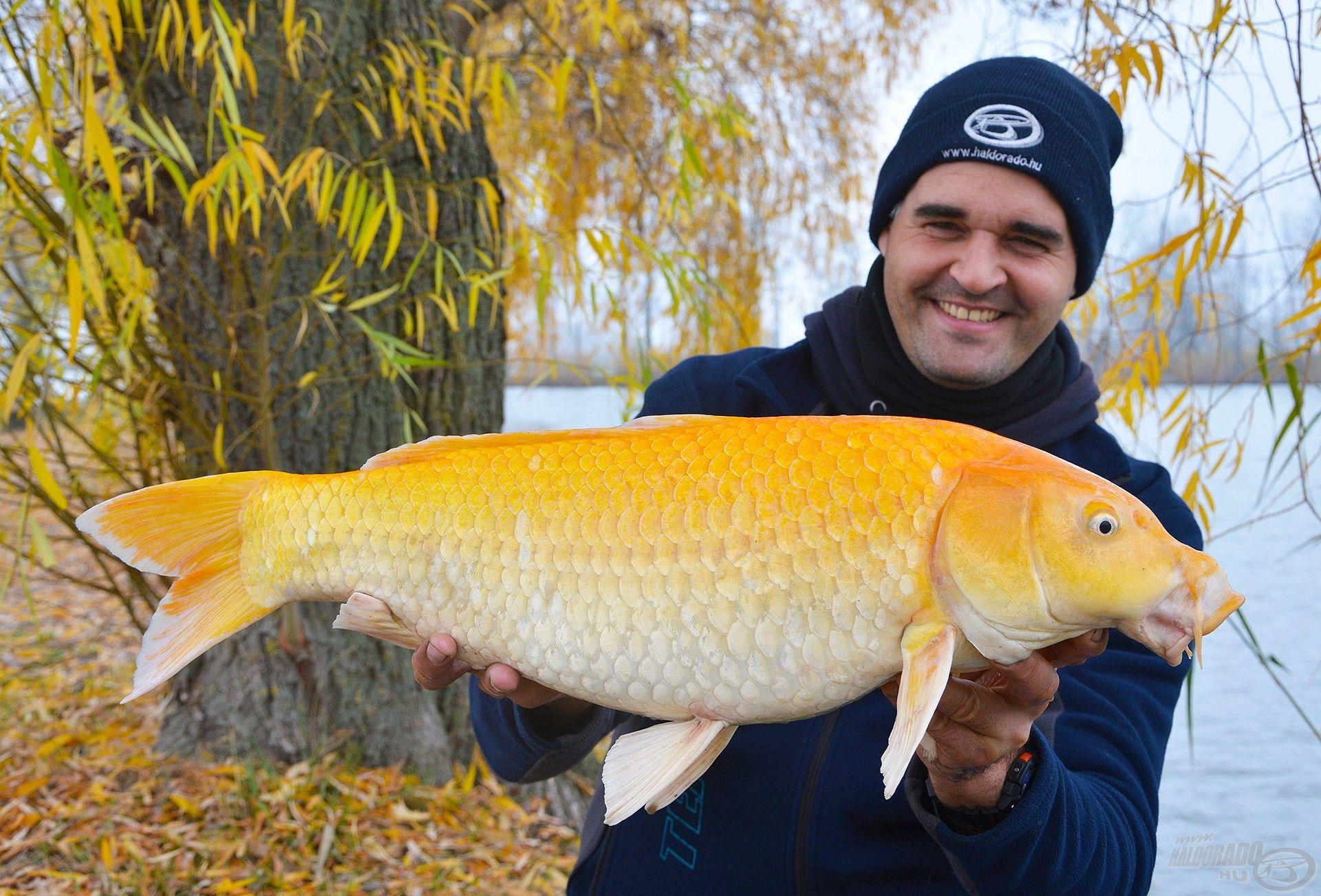 Akár nagyobb halakkal is elbír ez a rövid, vékony pálca