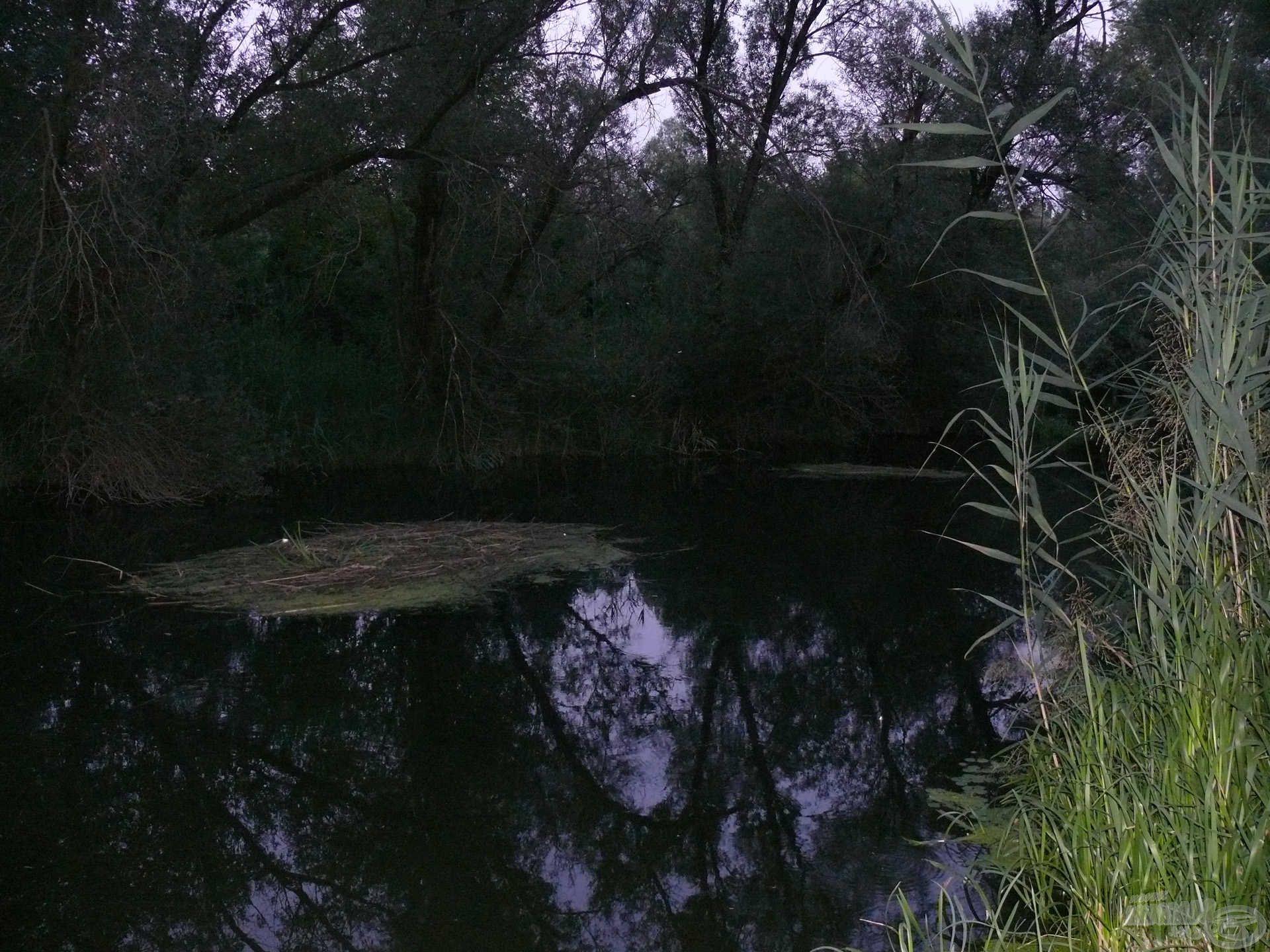 Úszó nádszigetek, amik megnehezítik a horgászatot