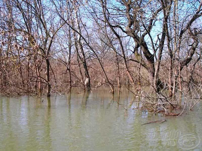 A fák között folyik vissza a víz a mederbe