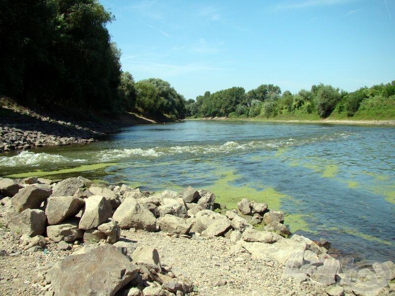 A csatornából bezúduló víz messziről összegyűjti a környék halait