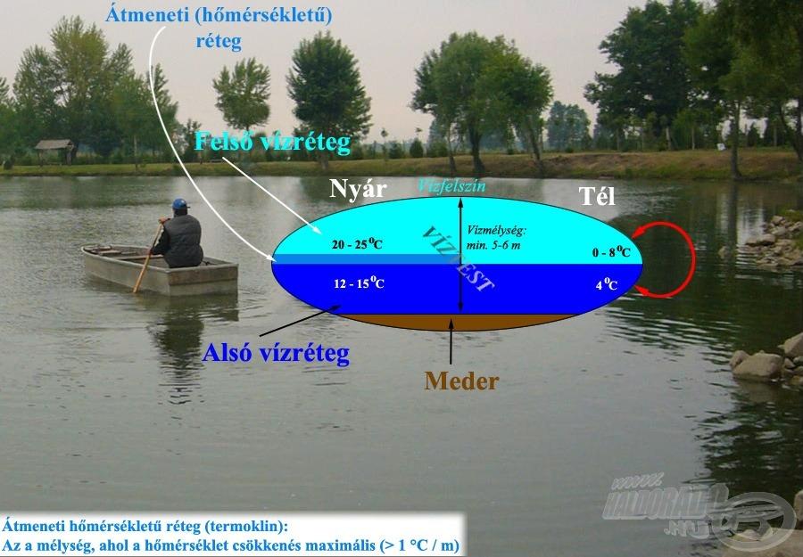 A mélyebb tavak esetén kialakuló rétegezettség grafikus ábrázolása