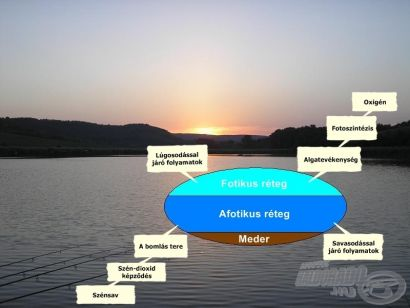 Az abiotikus   környezeti tényezők hatásai a pontyok táplálkozására 4. rész