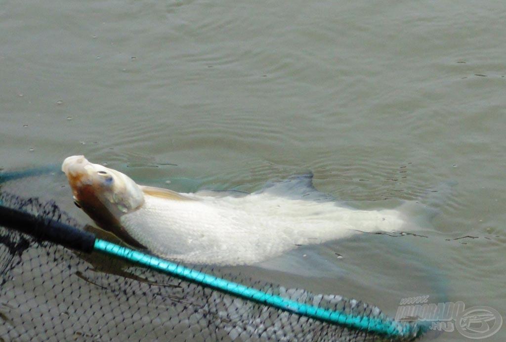 Horgászszívet melengető látvány!