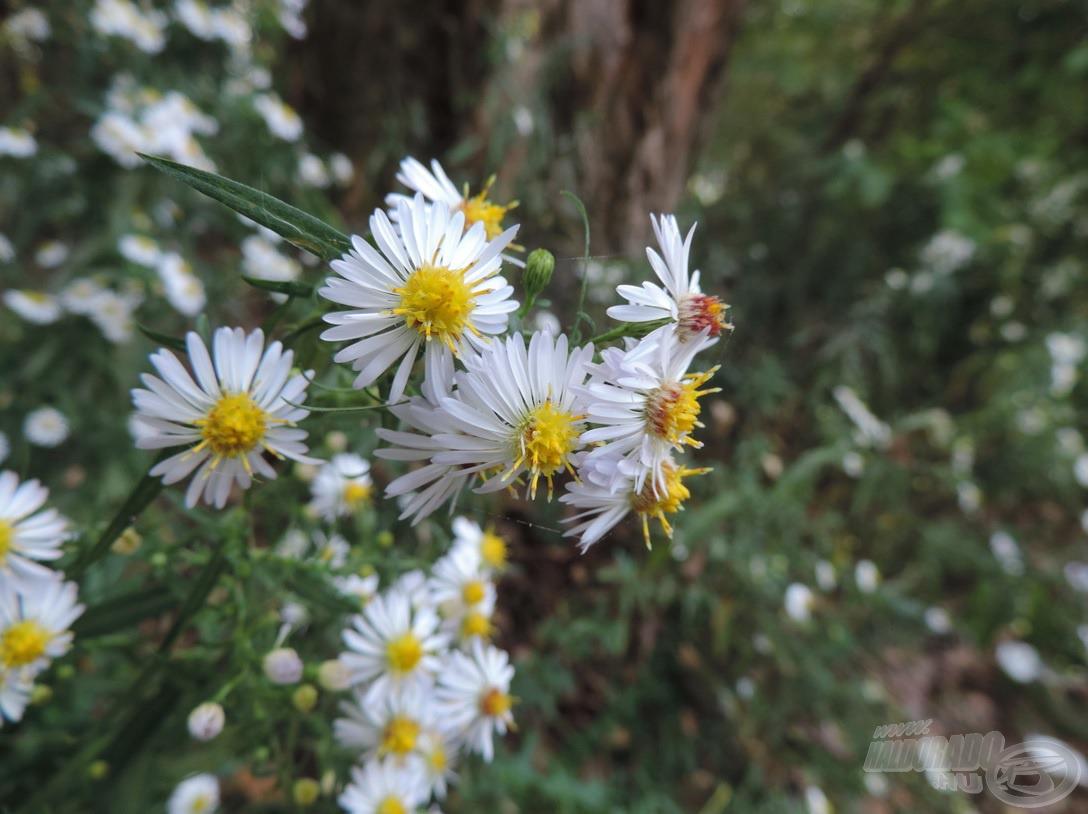 Szépen nyíltak még a vadvirágok…