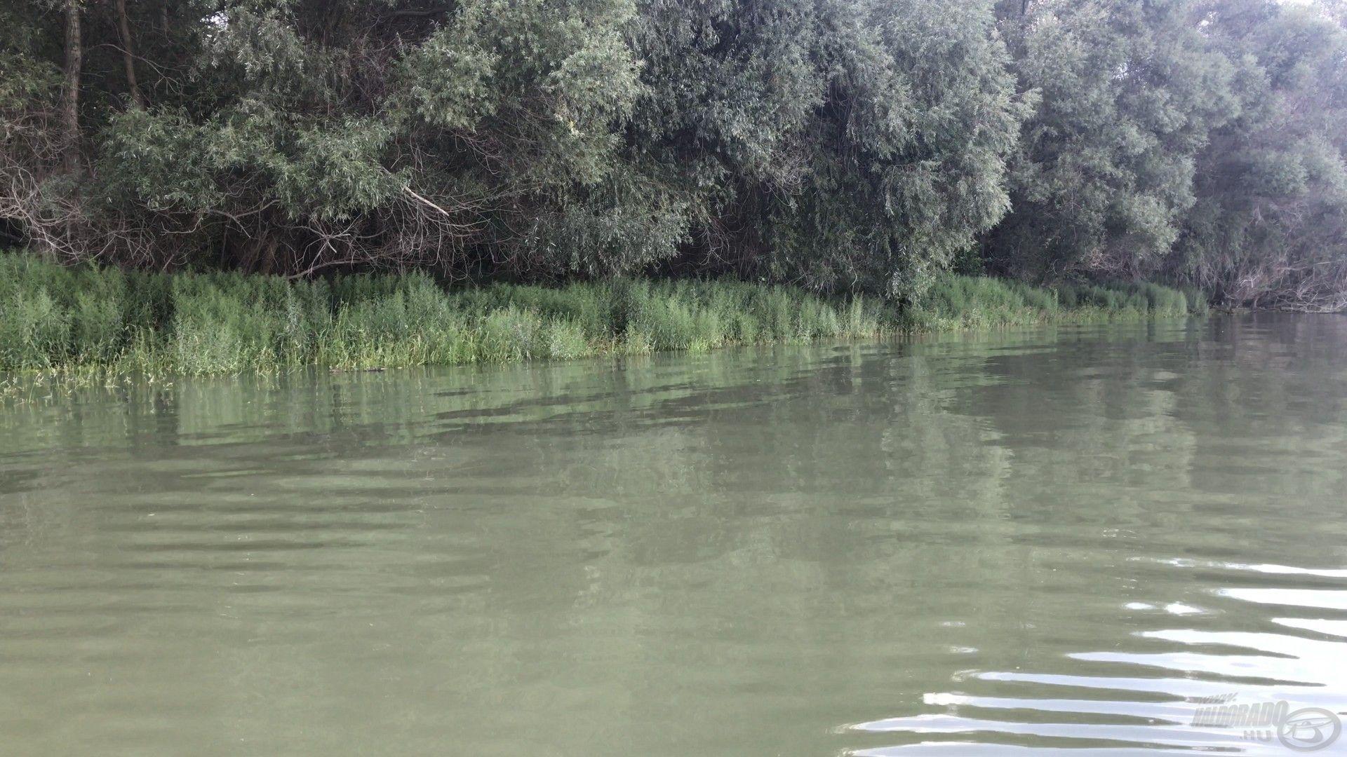 Ilyenkor a parti területek víz alá kerülnek, ezeket keresik fel a békés halak is a bőséges táplálék reményében