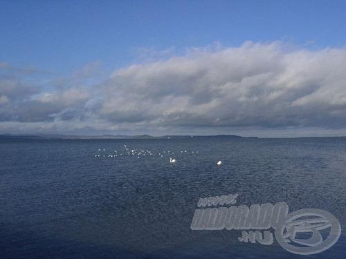 A késő őszi időszak lehűlt vizében süllőink sokszor csónakkal már nem elérhető távolságban bandáznak