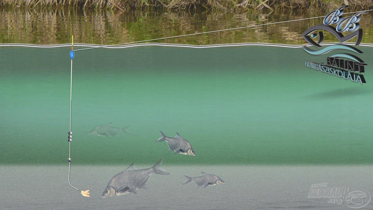Az úszó beállt, az összes ólom vízközt van, a csali pedig a fenéken, így az ott keresgélő halakat lehet megfogni. Ilyen a dévérkeszeg, a kárász vagy éppen a törpeharcsa