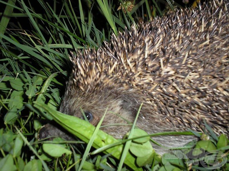 Szintén egy éjszakai látogató :-)