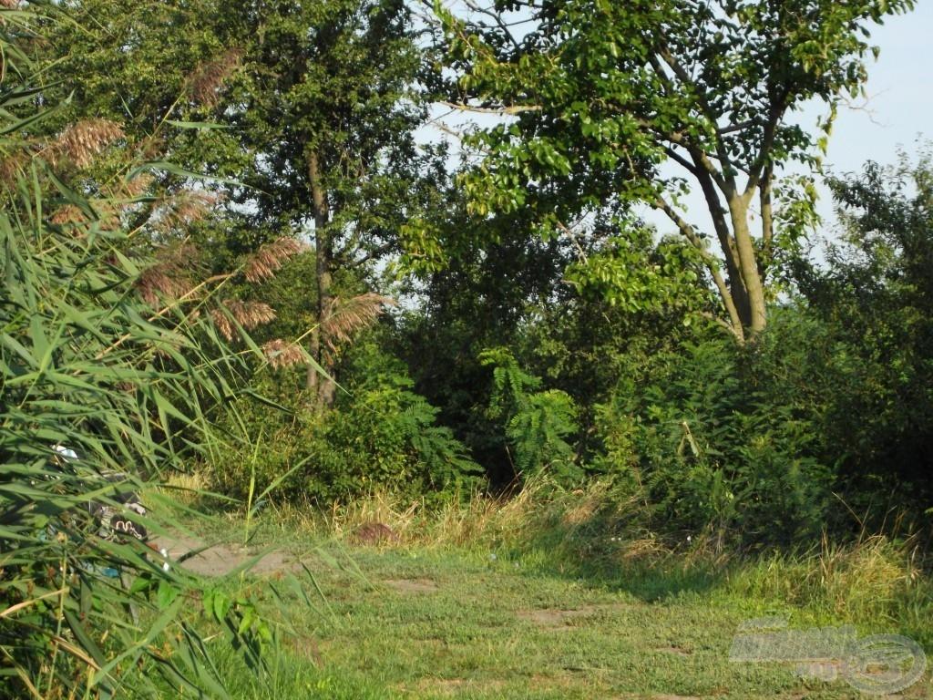 … vadregényes, nyugodt környezet
