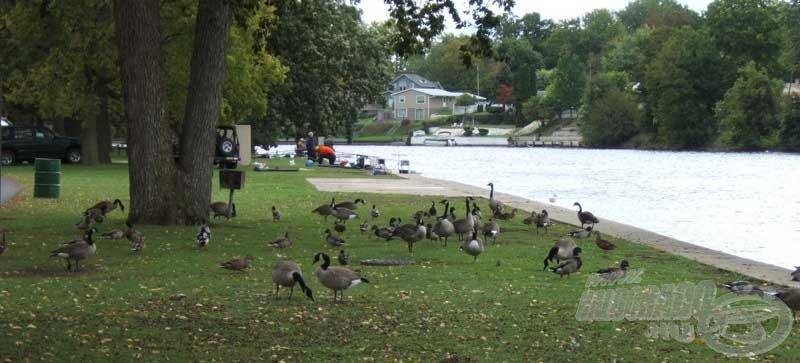 A McNaughton Park és a St. Joseph folyó