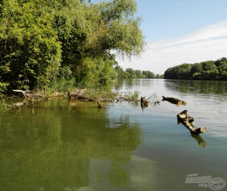 A vízbe dőlt fák jó haltartó helyek