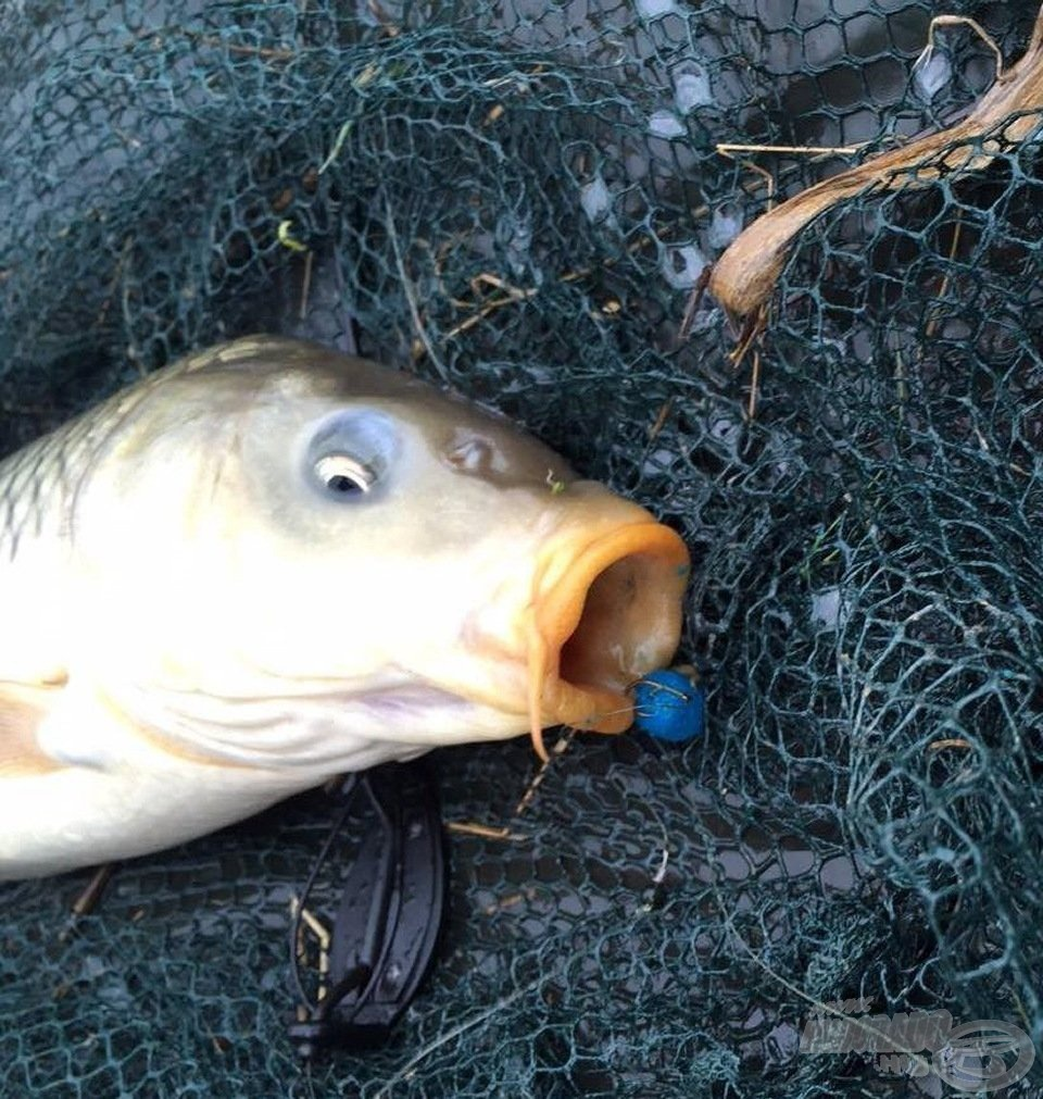 Matracon a nap első hala, melyet pillanatokon belül egy méretesebb társa is követett