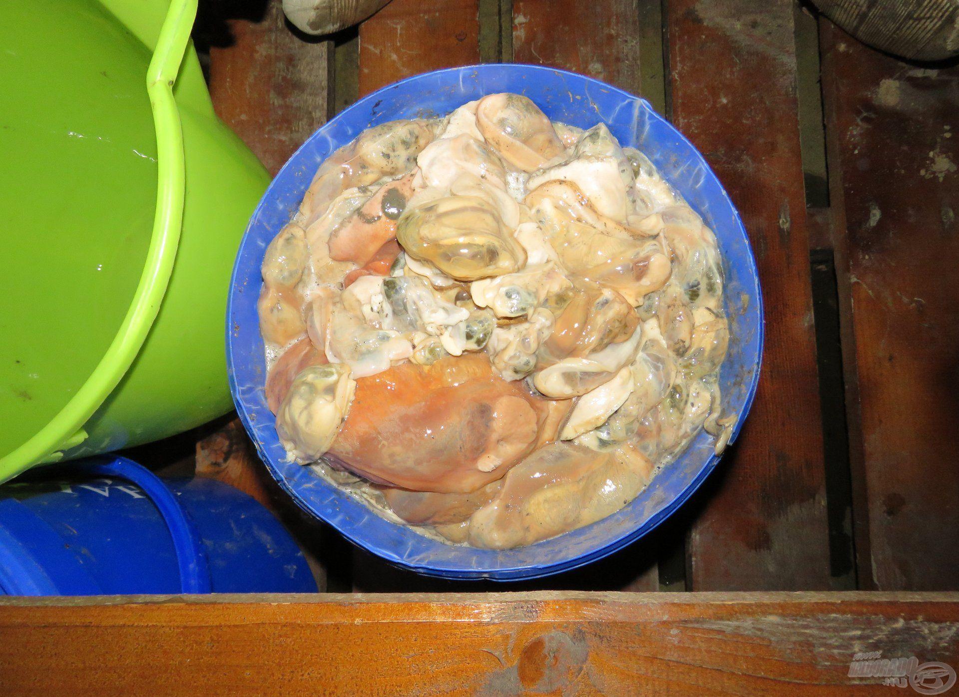 Egy vödör kagylóbél tálalva