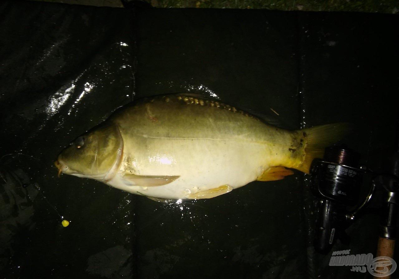 Az éjszaka első hala ez a tükrös, mely pontban éjfélkor érkezett