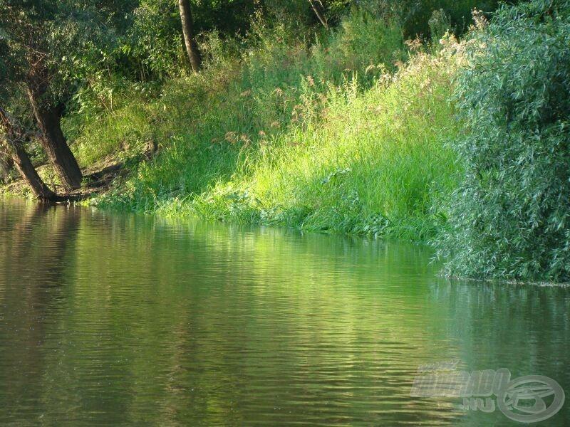 Az ideális horgászhely, bokrok és frissen elöntött, fűvel borított partszegély