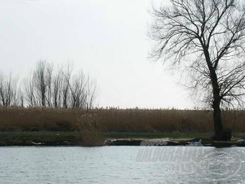 A 2-es pálya ideális hely a több résztvevős csapatoknak. Óriási vízterület áll a horgászok rendelkezésére, 9 bottal (ahogy mi is horgásztunk) kényelmesen el lehetett férni