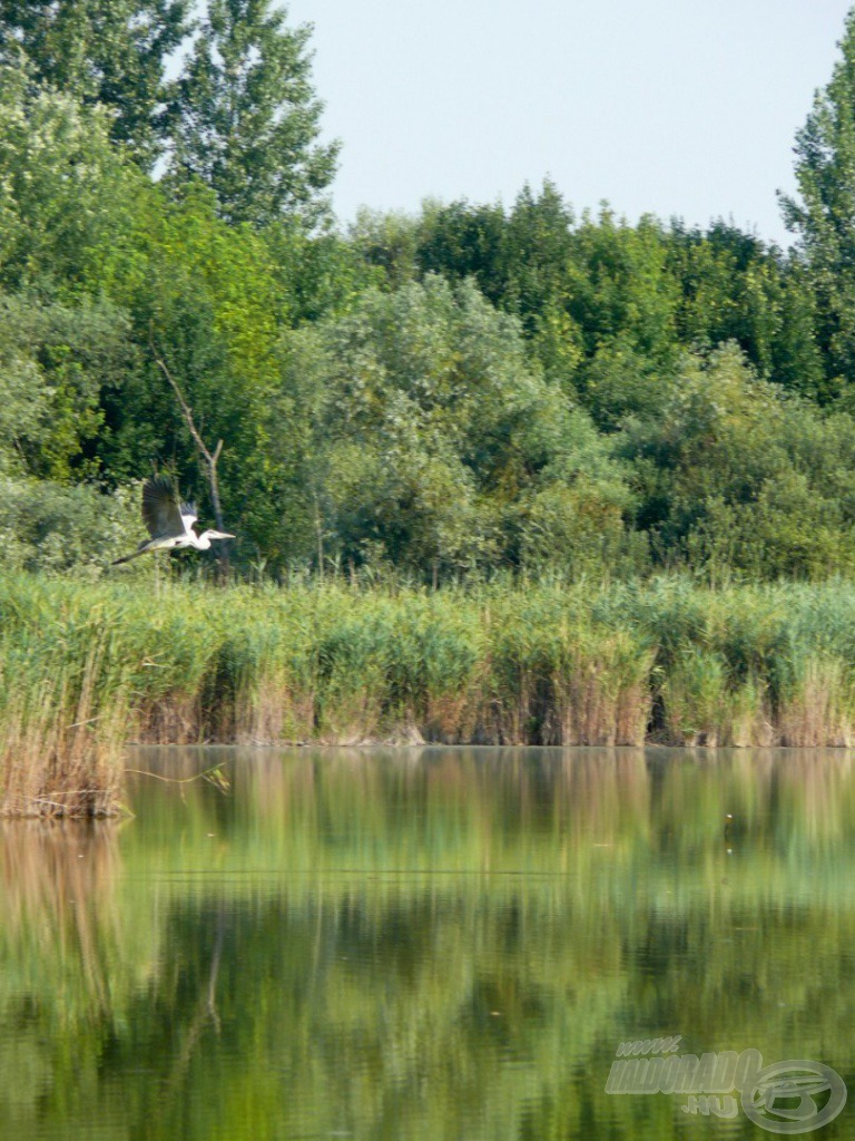 A csodás madárvilág a tó részét képezi