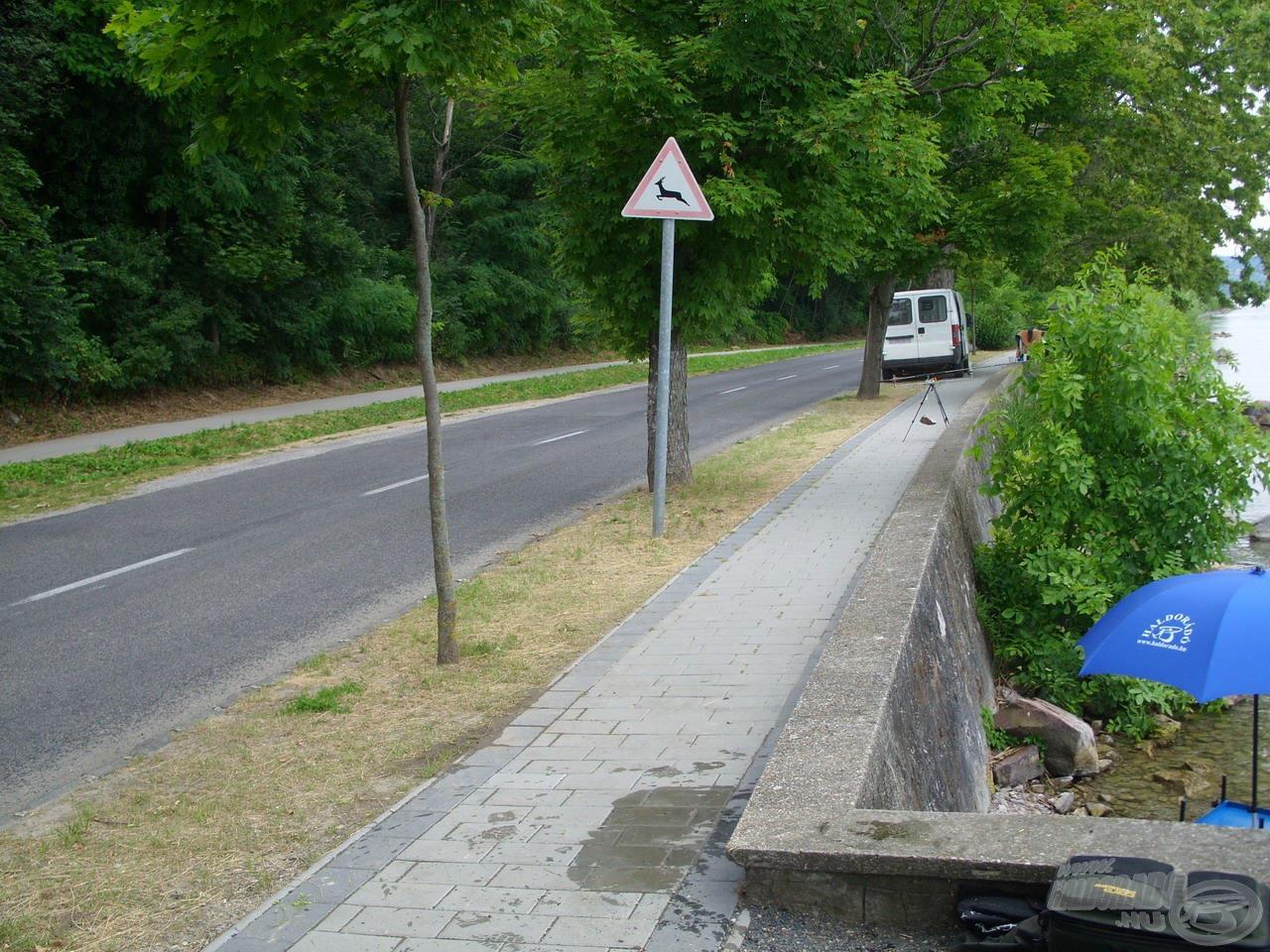 A kőbástyánk mögött álló fák terebélyes ágai, illetve a rendszeres kerékpár- és gépjárműforgalom számomra ellehetetlenítette a zavartalan horgászatot, ezért váratlan megoldáshoz kellett folyamodnom…