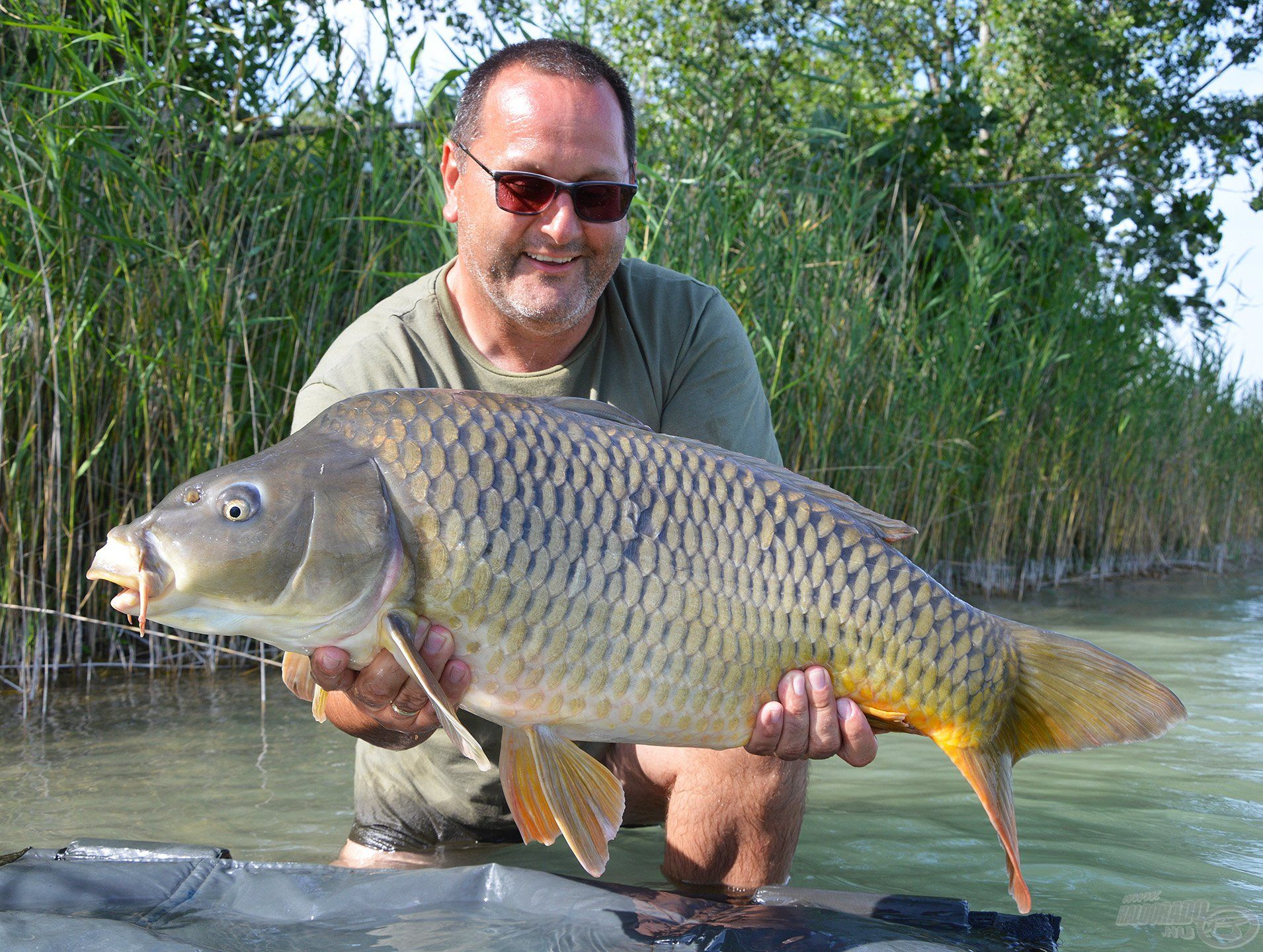 Vendéglátónk, Halengár Zoli is velünk horgászott egy ideig és bizony nem volt rest kihasználni a hazai pálya előnyeit, gyönyörű halakat fogott! :-)