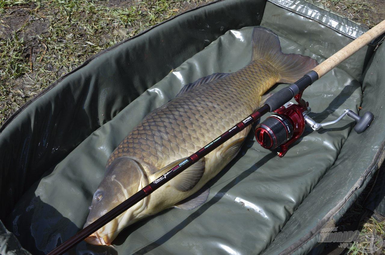 Ez a bivalyerős, sötét tőponty méltó ellenfele volt felszerelésemnek, a fárasztás során minden erejére szükség volt, hogy a halat legyőzhessem