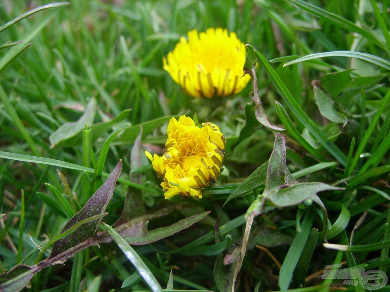 A sarjadó élet jelei már megmutatkoztak a növénytakaró apró színfoltjaiban