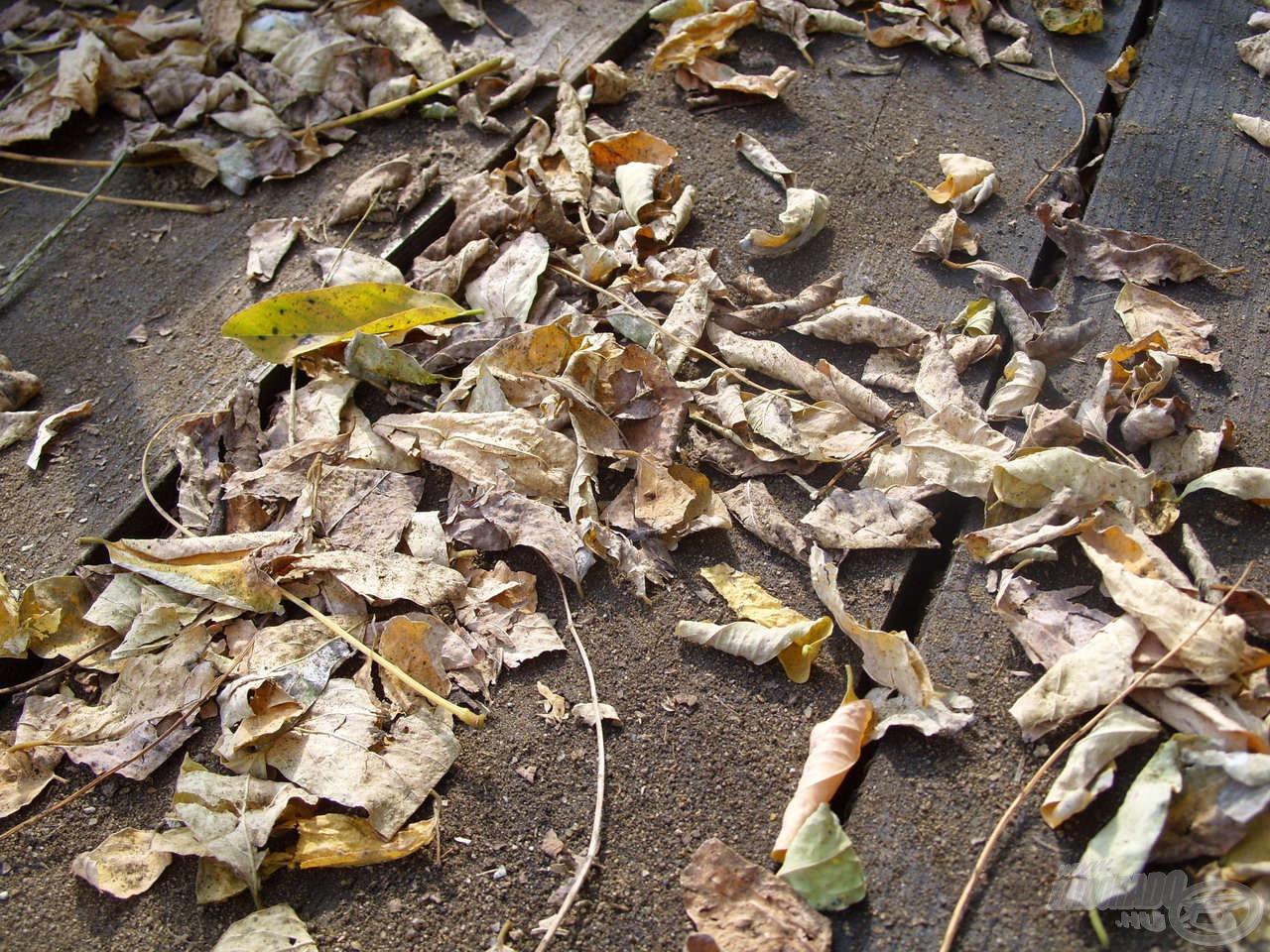 Sajnos eseménytelenül alakult a reggeli horgászatom, ezért volt időm az őszi természet apró jellegzetességeiben gyönyörködni