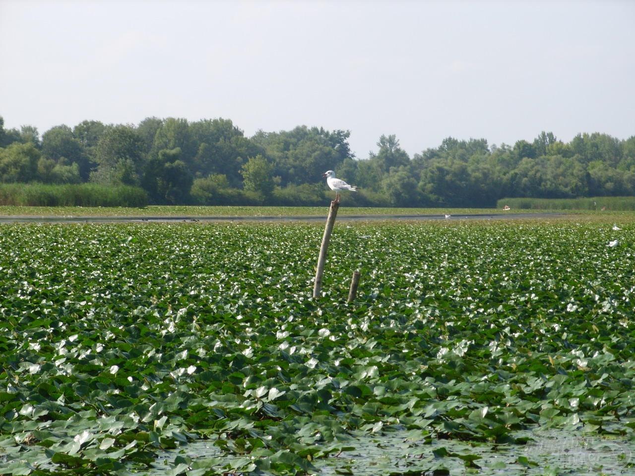 Rendkívül gazdag a tó madárvilága…