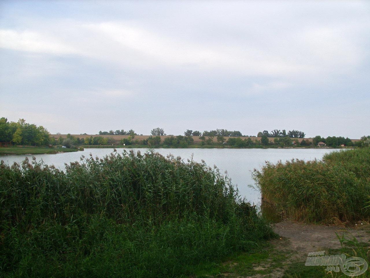 A hátsó szakaszhoz közeledve növekszik a nádasok kiterjedtsége. Sok horgászhelyet a nádfalban alakítottak ki