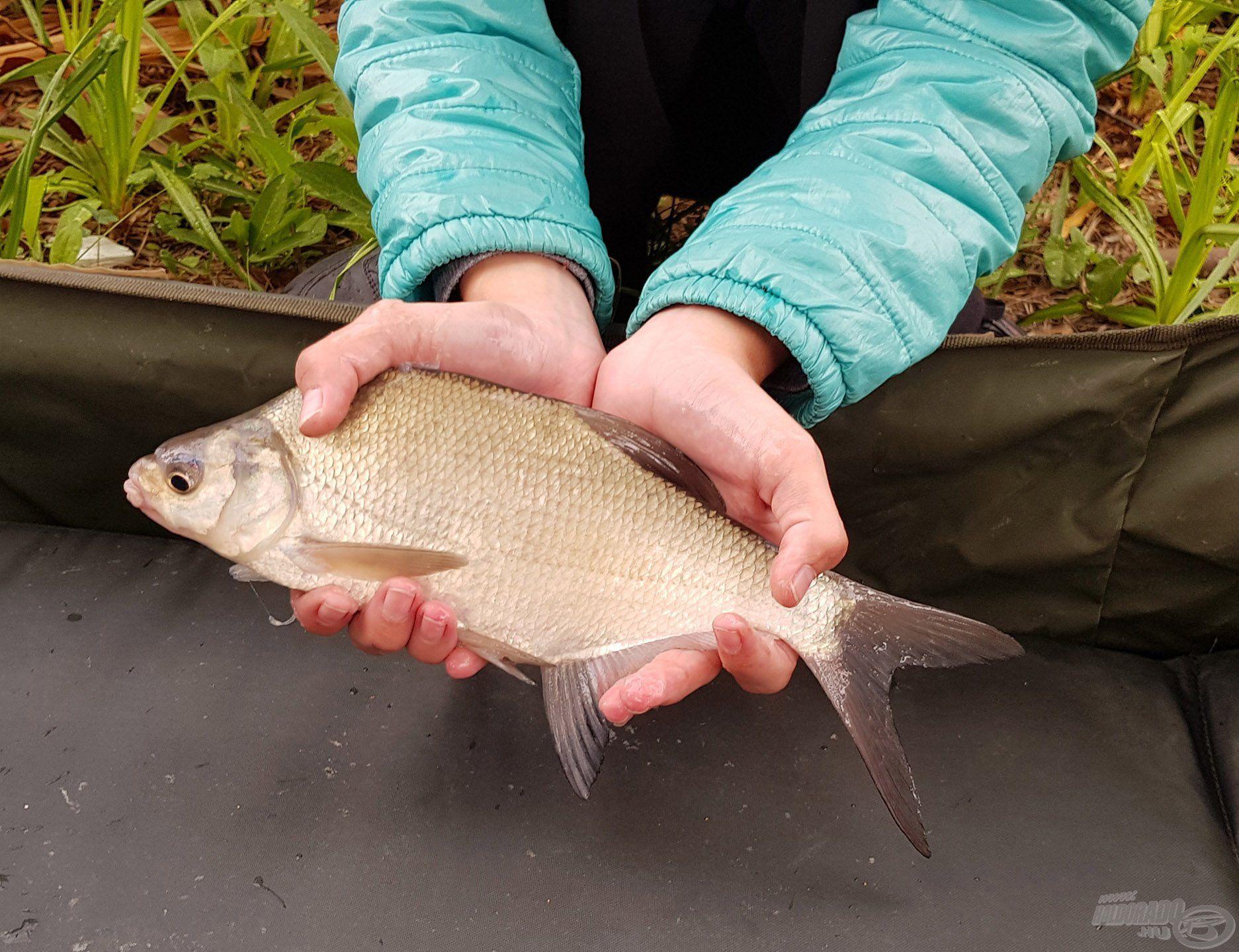 A nagyhalas horgászatot a kisebb keszegek…