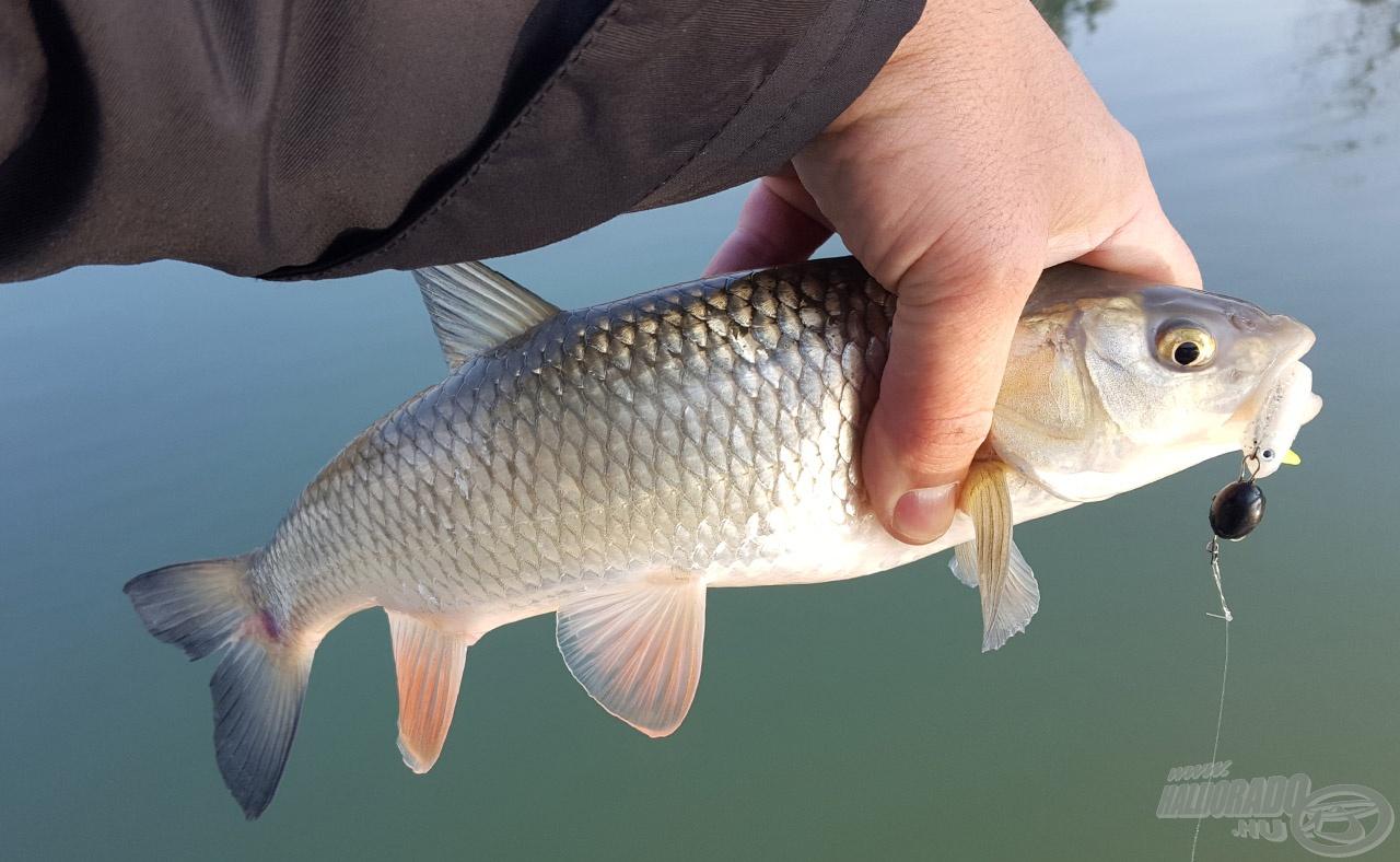 13 perccel Sanyi hala után én is halat tarthattam a kezemben az év utolsó napján