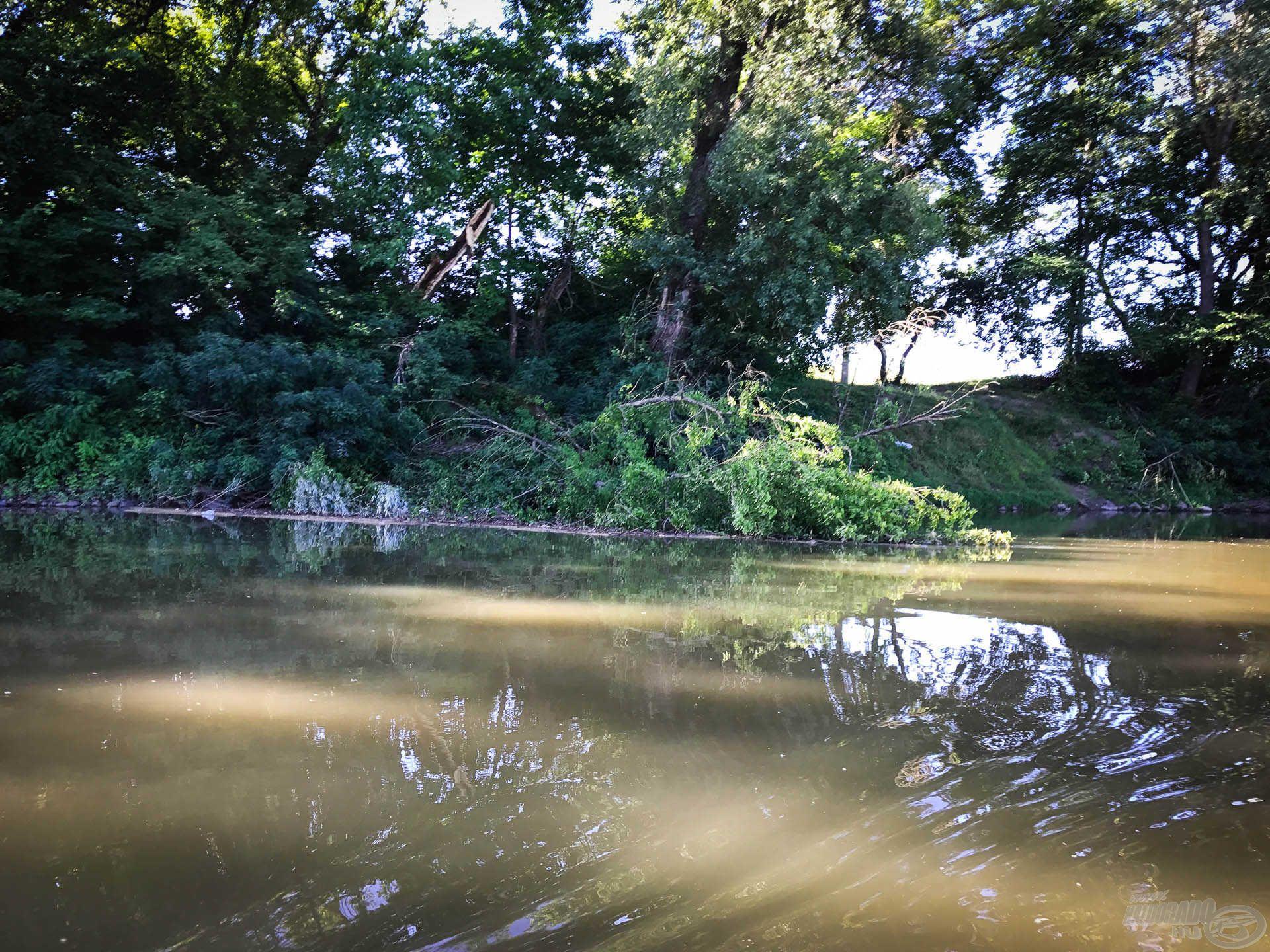 A következő terület egy – a folyóba bőven benyúló – fa környéke volt