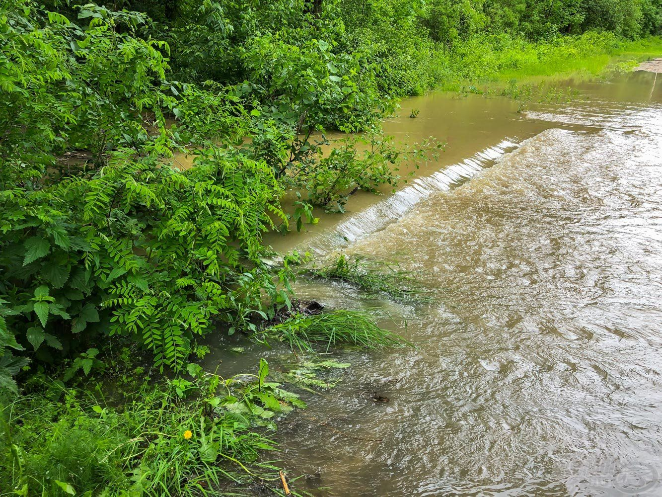 Egyik nap még csak az ártéri mélyebb szakaszokon ömlött a víz, ahogy feljött 2 métert…