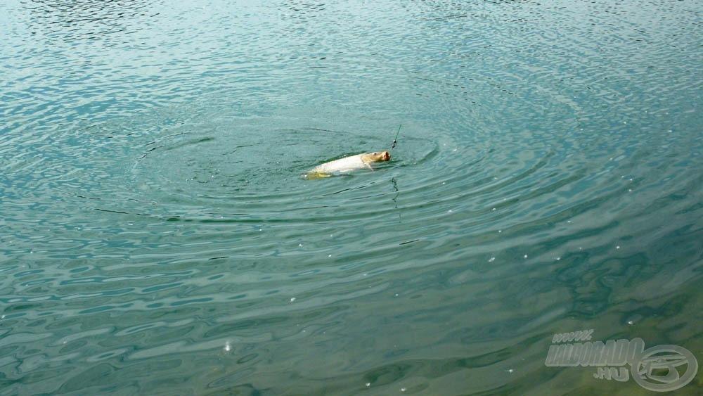Szegény halak nem nagyon örültek a durva bánásmódnak