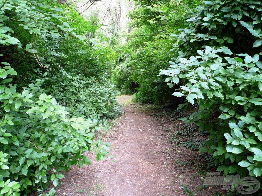 Szűk kis ösvény